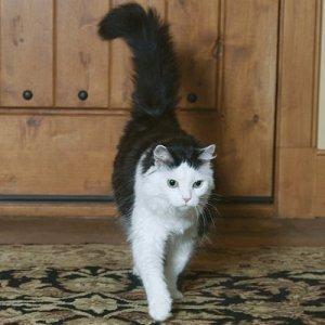 「confidence cat」の画像検索結果