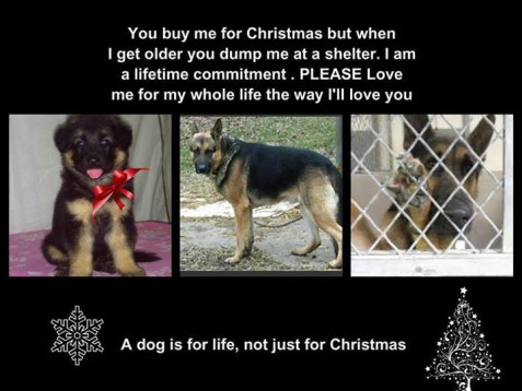 A Dog Is For Life Not Just For Christmas Pets On Board