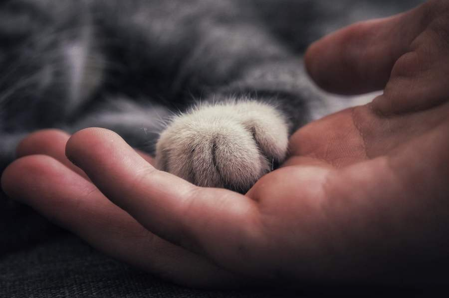 THINGS YOU CAN DO TO GAIN YOUR CAT TRUST