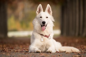 Most Popular Dog Breeds in the World (2020). https://www.petspalo.com