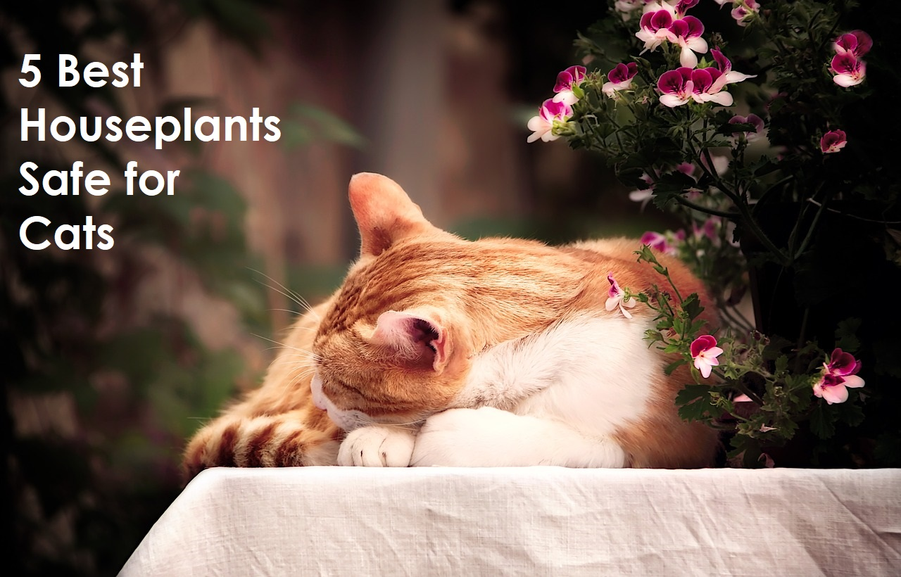 5 Best Houseplants Safe for Cats. https://www.petspalo.com/