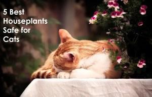 5 Best Houseplants Safe for Cats. https://www.petspalo.com/
