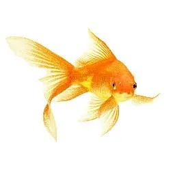 Fish Category