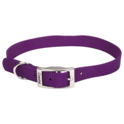 Coastal Single-Ply Dog Collar, Purple, .75 inches by 8 inches.
