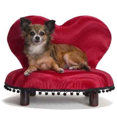 4 Pet Tips For Valentines Day Dog Cat And Other Pet