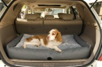 Great Gifts For The Traveling Pet Lover, Dog, Cat and ...