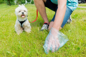 A responsible pet parent must have no qualms in cleaning after their furry kids. Image: www.dogster.com