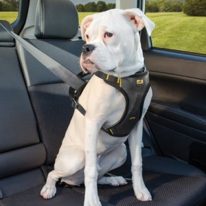 When you use a collar the pressure is directed at the neck and pulling on it may cause injuries in small and delicate dog breeds. On the other hand a harness distributes the pressure on the back and entire body. Image - happytailsrule.com