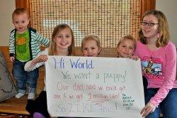 Puppy-önskan på Facebook