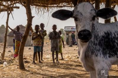 Trop jeunes pour partir avec les troupeaux, les enfants restent au village.