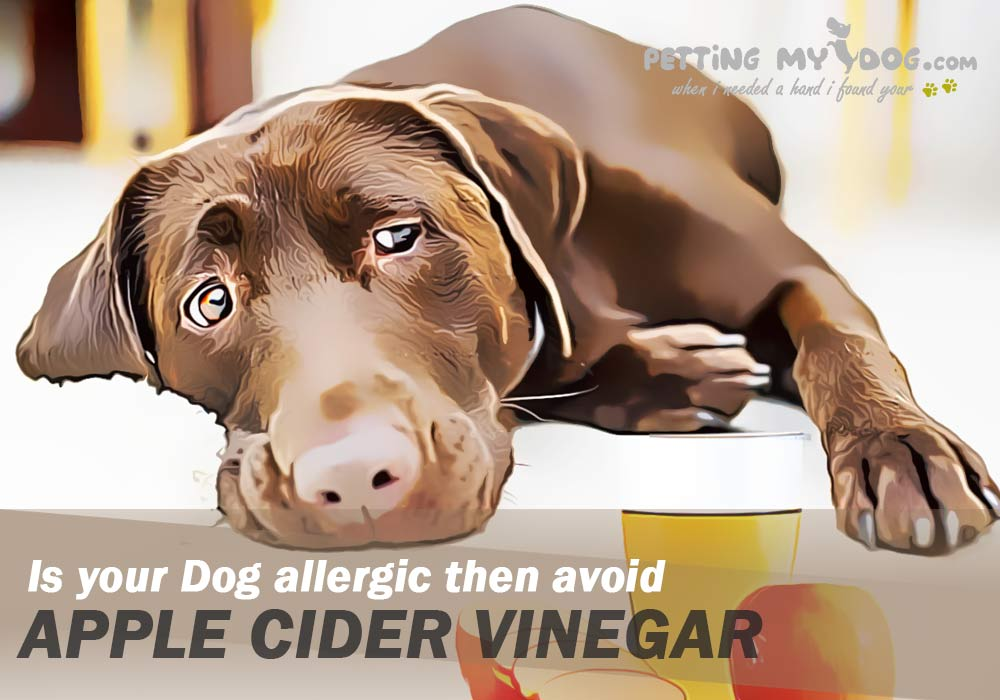 Is vinegar bad for Dogs? Read this article and know in detail