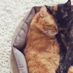 The Best Cat Bed Reviews Pet Toy Uk 2020