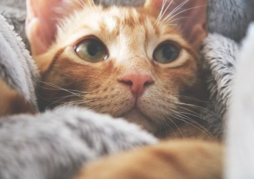 The Art of Purring: 5 Common Reasons Why Cats Purr