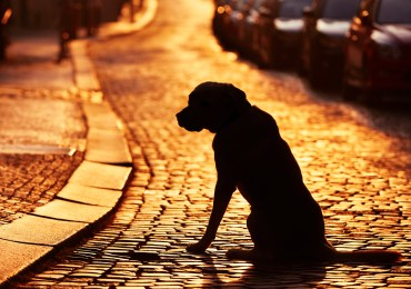 4 of the Best Ways to Stop your Pet from Getting Lost