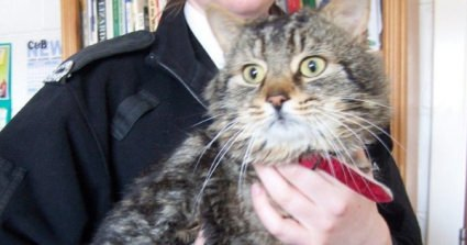 Cat Left Outside Rescue Centre