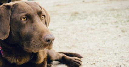 Four In Ten Pet Owners Have 'Pulled A Sickie' For Their Pet