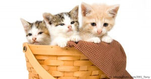 Selecting A Cat Or Kitten
