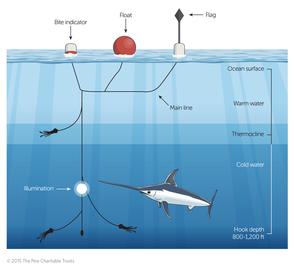 DeepSet Buoy Gear A Better Way to Catch Swordfish  The