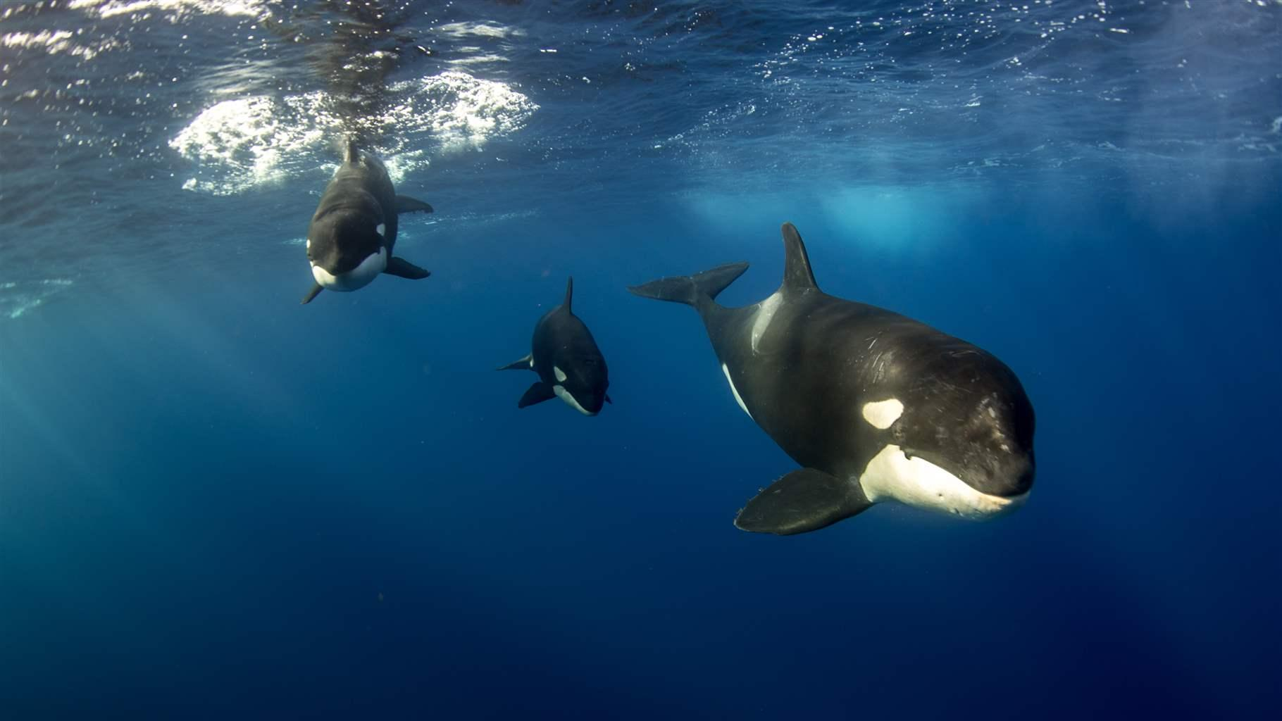 Governments Begin Considering New Ocean Conservation