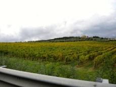 Schöne Weinberge