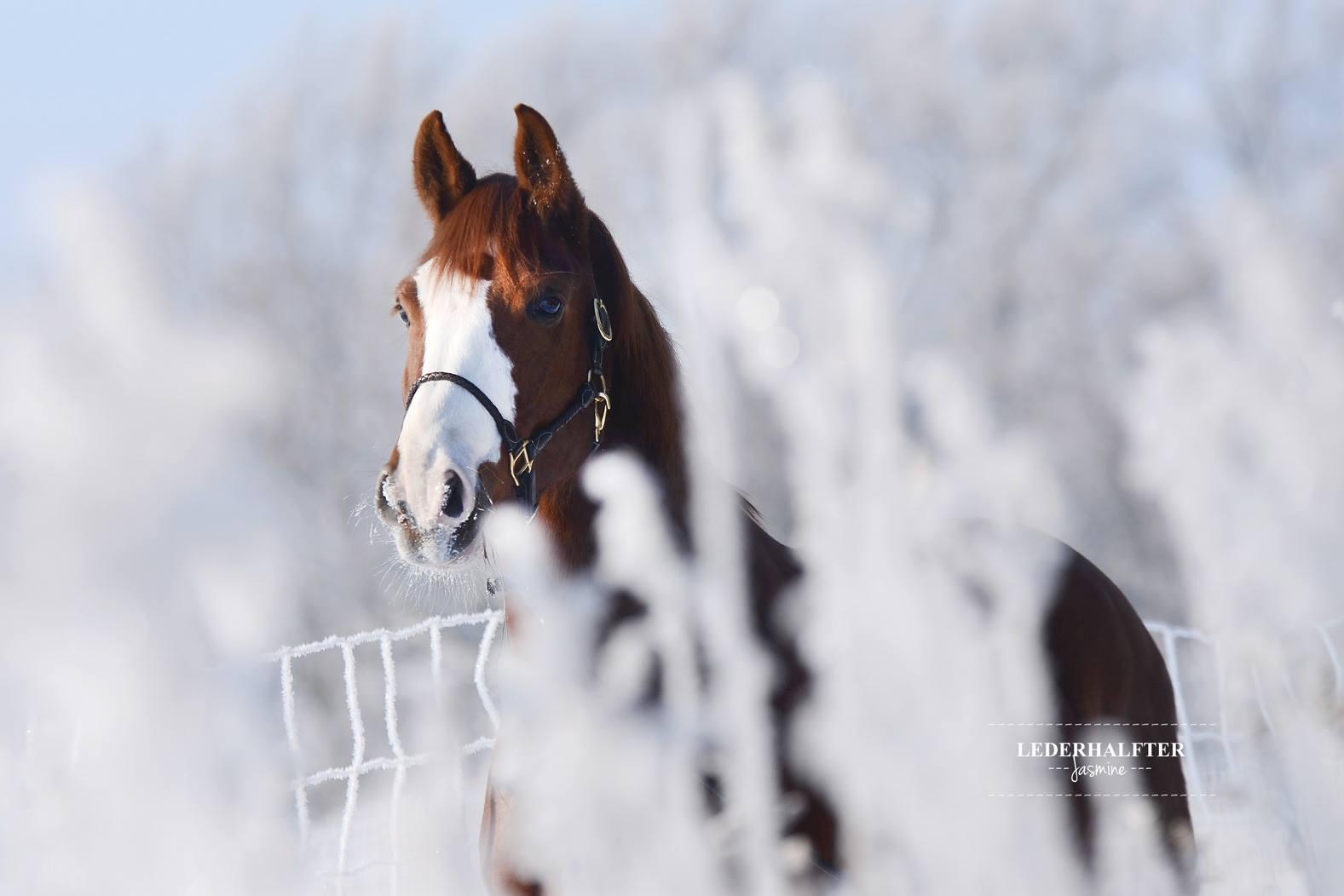 WinterFotoshooting  Pferdeliebe  das Magazin
