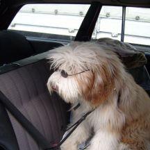 Werkstatthund Ludwig