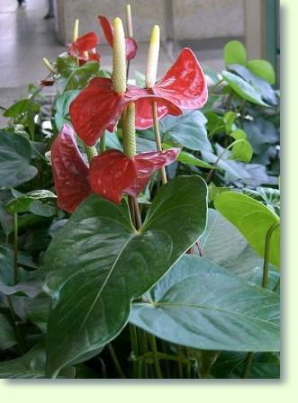 Pflege von Zimmerpflanzen  Pflanzenfreunde