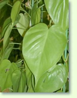 Baumfreund Pflege  Pflanzenfreunde