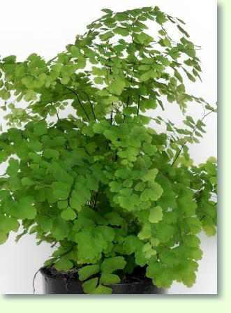 Zimmerpflanzen Amazon