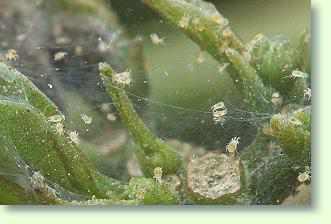 Pflanzenschdlinge bekmpfen Pflanzenfreunde