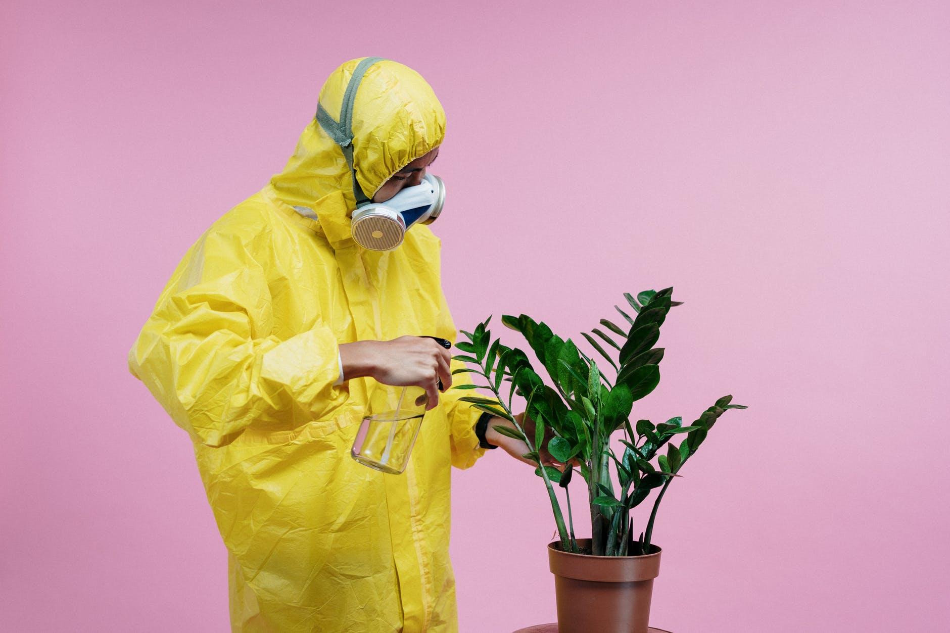 Eine Pflanze wird von einer Person mit Schutzausrüstung eingesprüht
