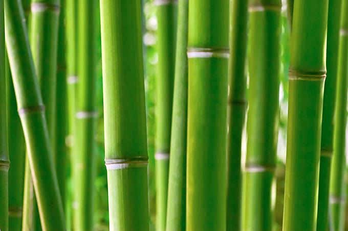 sichtschutz mit pflanzk bel mit bambus das pflanzk bel blog. Black Bedroom Furniture Sets. Home Design Ideas