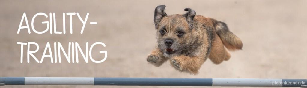 Hund springt über Hürde beim Agility Training