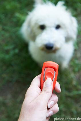 Clicker im Hintergrund sitzender, wartender Hund