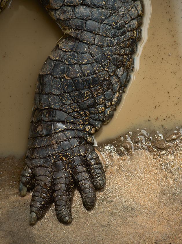 Beautiful and bizarre beasts behind Darwins theory  Photography  Agenda  Phaidon