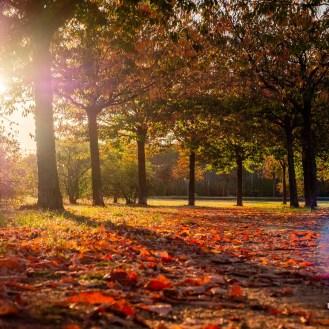 Herbstfotografie: Rotes Laub zur Abendstunde 2