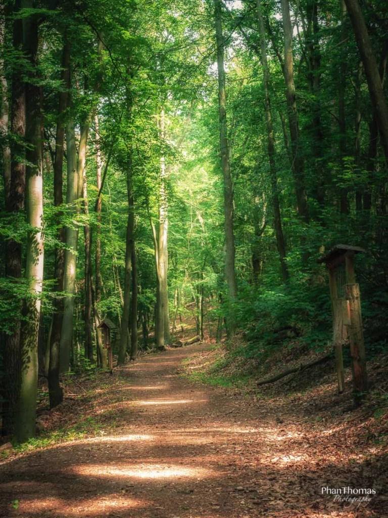 Waldweg am Teufelssee
