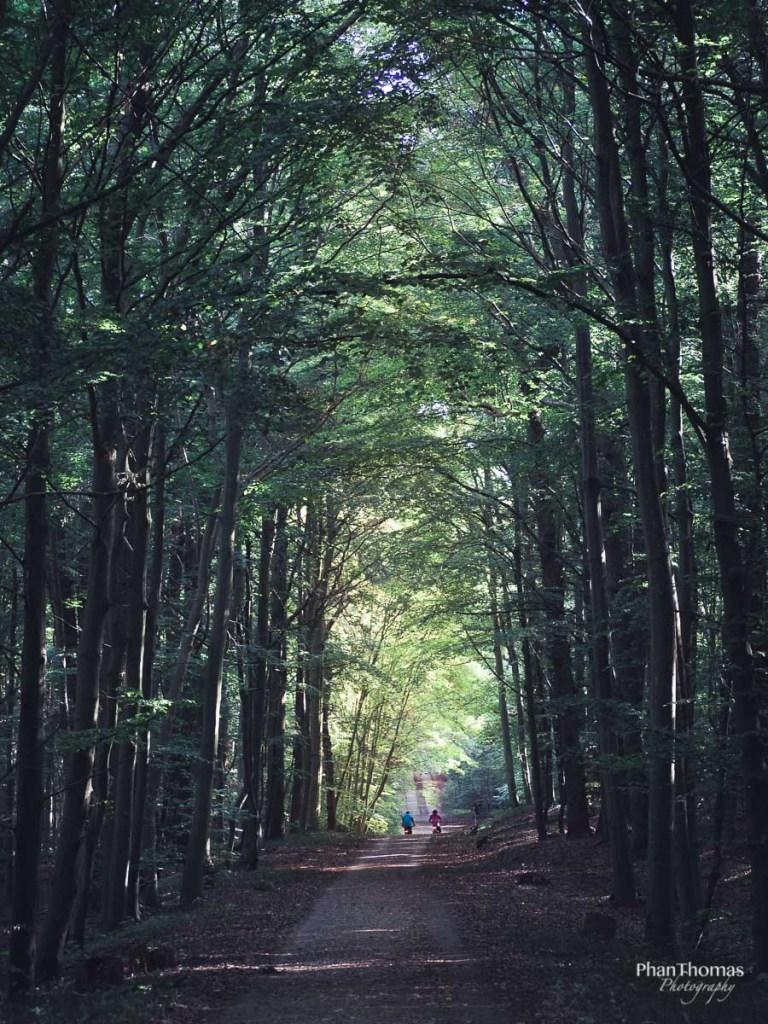Wald nahe Binz