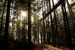 tree_top_walk_1