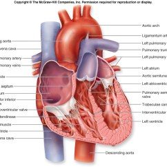 Interior Heart Diagram Three Phase Submersible Motor Starter Wiring Anatomy Physiology Of The Human
