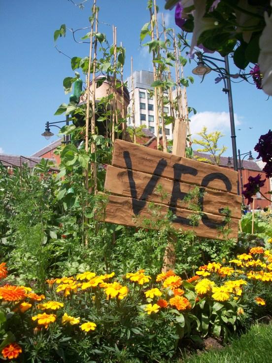 Oldham Floral Display by Phil Edmonds