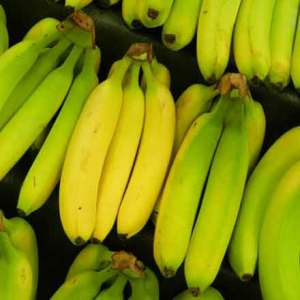 Bunch of bananas