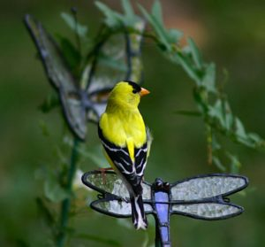 gold-finch-215101_1280