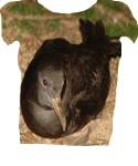 Mutton Bird TShirt: John Berry for 936 miles !