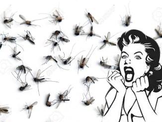 dengue fever Philippines mosquitoes