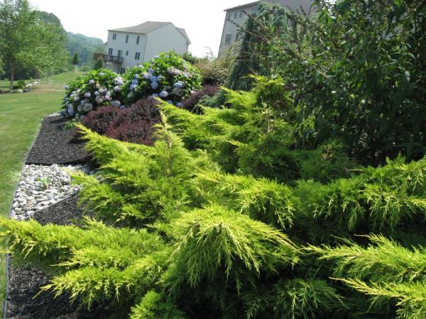 simple landscape home landscaping