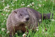 The Coyle Group Philadelphia Appraiser - Groundhog