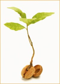 Photo of a sprouted seed, to symbolize growth as a result of fundraising.
