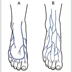 Veins In The Foot Diagram Ibanez Rg Prestige Wiring Venous System Of Anatomy Physiology And Clinical Marginal Their Superficial Network Connected Anteriorly