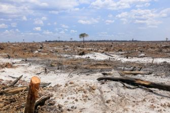 A few scattered trees last week stand in a section of scorched land belonging to Think Biotech that was previously a lush forest in Kratie province.